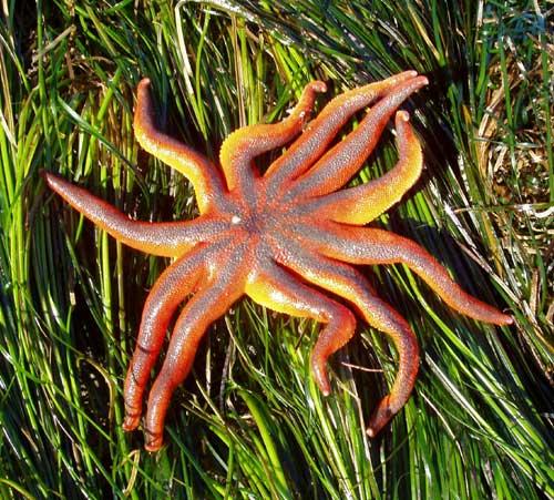 2010_Stimpson-Sun-Star